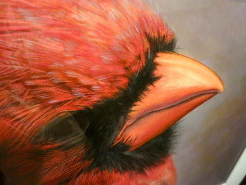 Northern Cardinal (Male) II, Cardinalis cardinalis, Hand-painted silver gelatin print 1998 by Kate Breakey. Photo by Wayne Stratz as seen at the Michener Art Museum