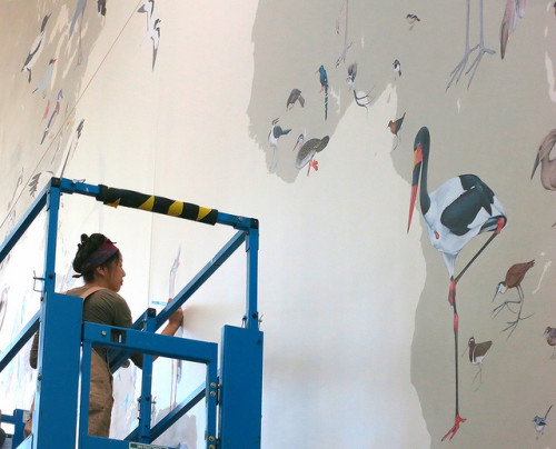 The Art of the Bird: Jane Kim and Ink Dwell needed some space to capture the diversity; Cornell Lab of Ornithology came through